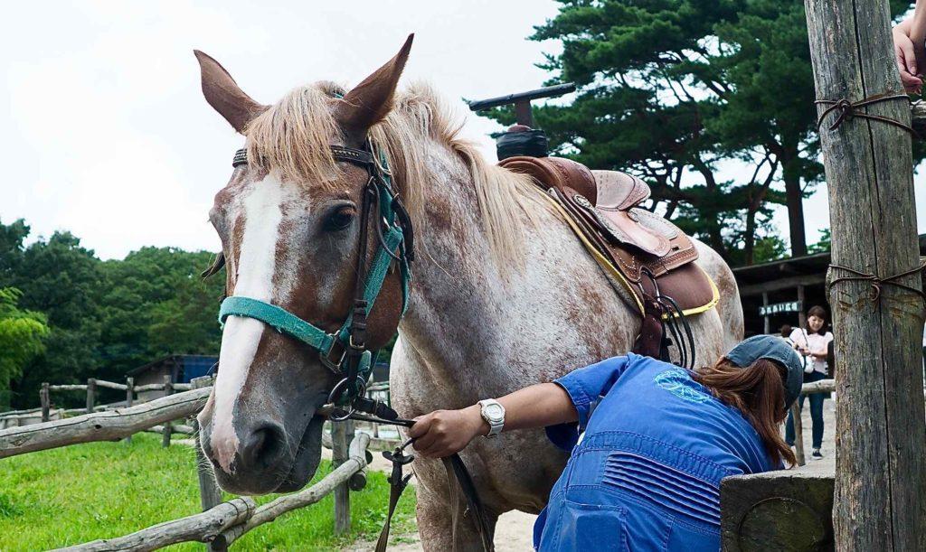 定番の乗馬もある