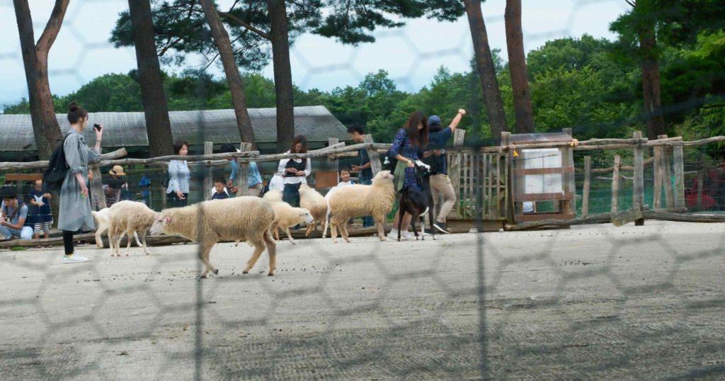 ヤギやヒツジと戯れる「ふれあい広場」