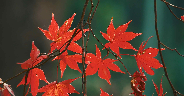 京都伏見稲荷の紅葉
