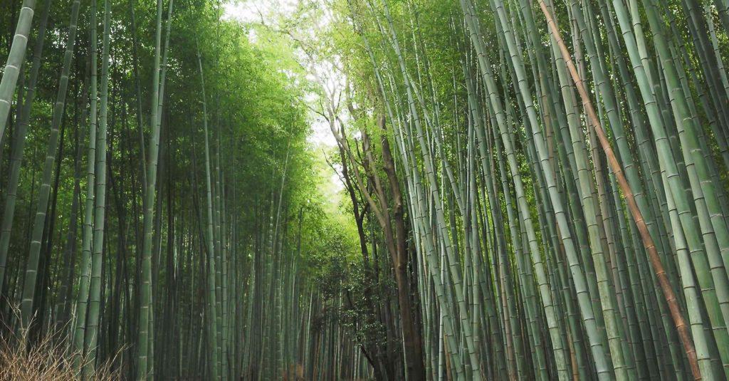 竹林から覗く空
