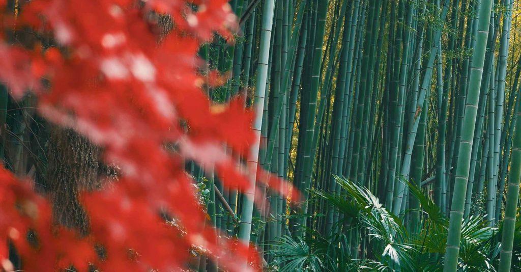 伏見稲荷の紅葉と竹林