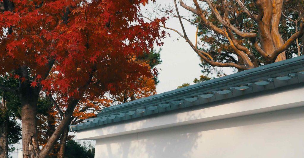 伏見稲荷の紅葉