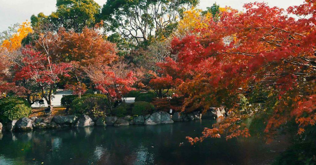 東寺の紅葉は池の周りがおすすめ