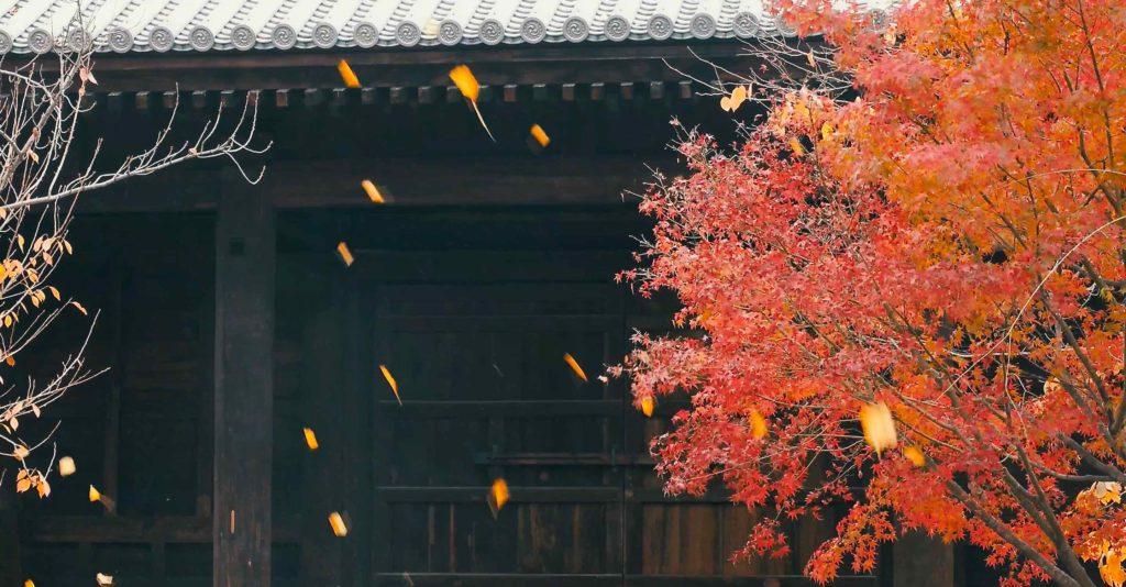 まだまだある東寺の紅葉スポット