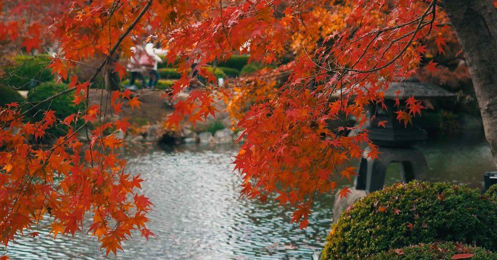 東寺の池と紅葉