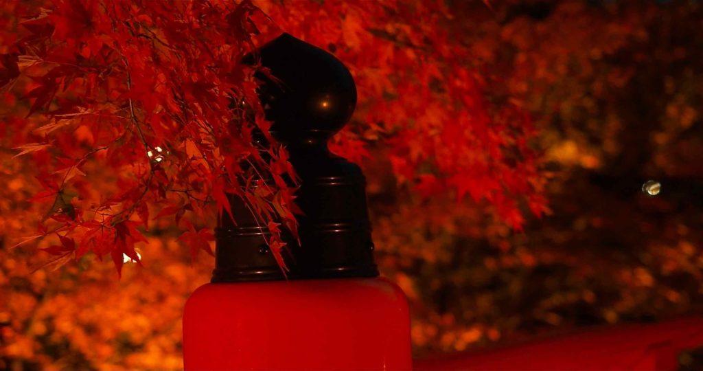 赤い舞台にも紅葉が映える