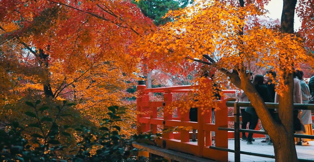 北野天満宮 昼間に見る御土居の紅葉