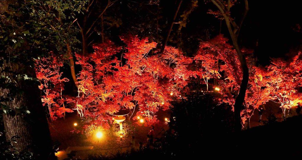北野天満宮 御土居の上から見た紅葉