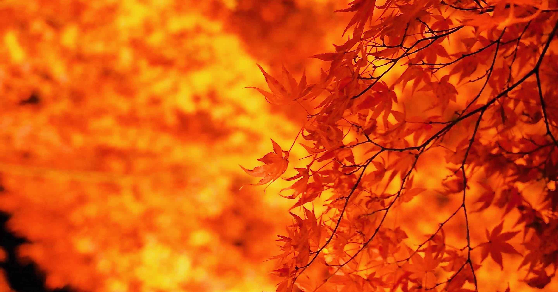 さらに燃える北野天満宮の紅葉ライトアップ