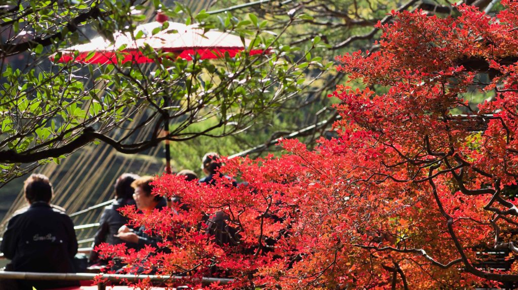 F値4.5で撮影した六義園紅葉