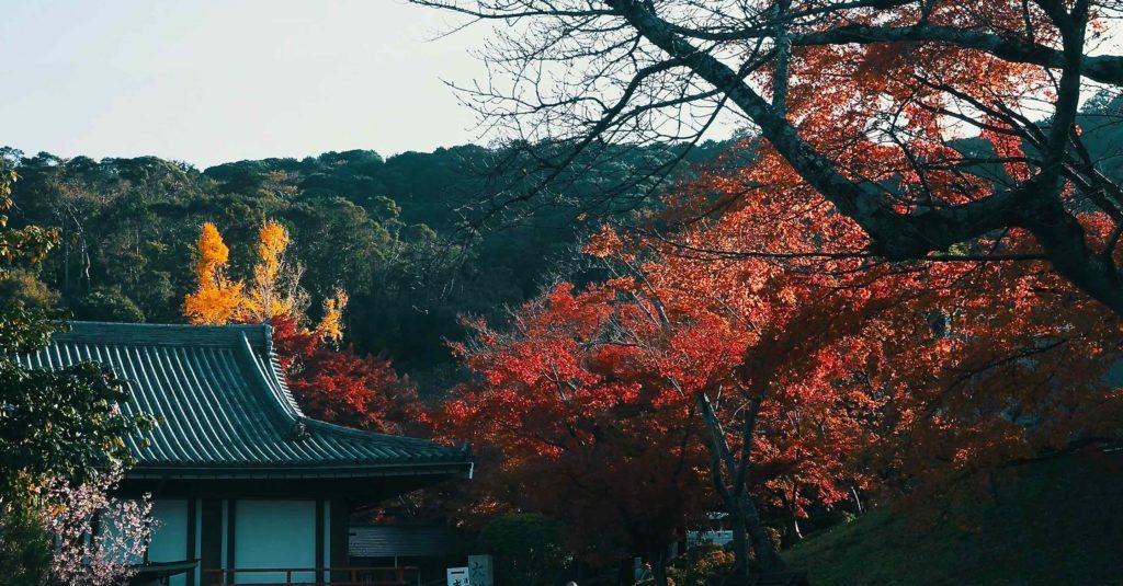 そして清水寺の紅葉に出会う