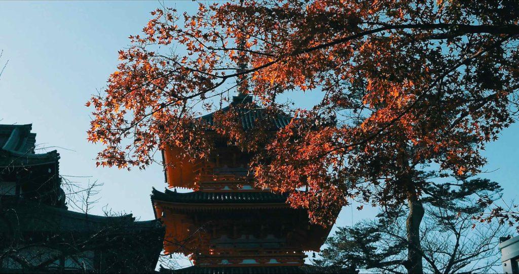 清水寺の三重塔と紅葉