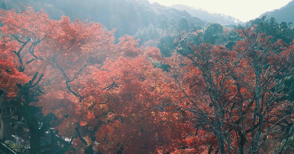 清水寺 朝靄と紅葉