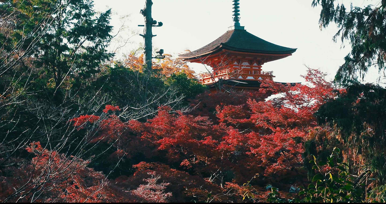 清水寺紅葉はすごかった