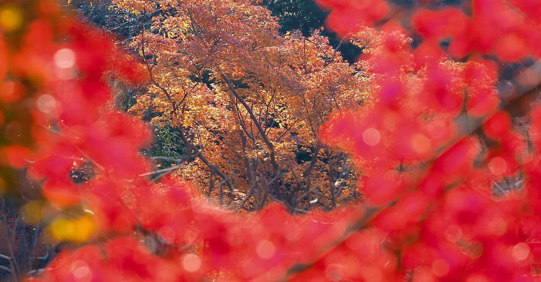 清水寺の紅葉パート2