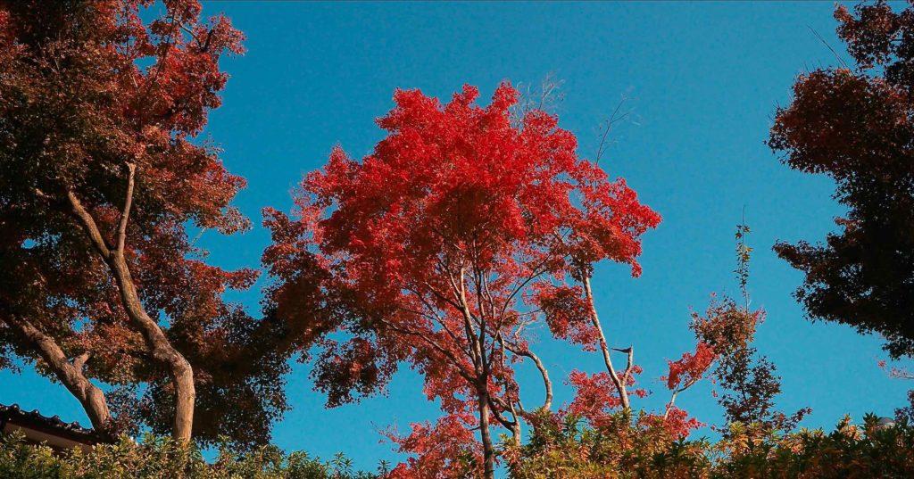 高台寺の手前で紅葉に出会う