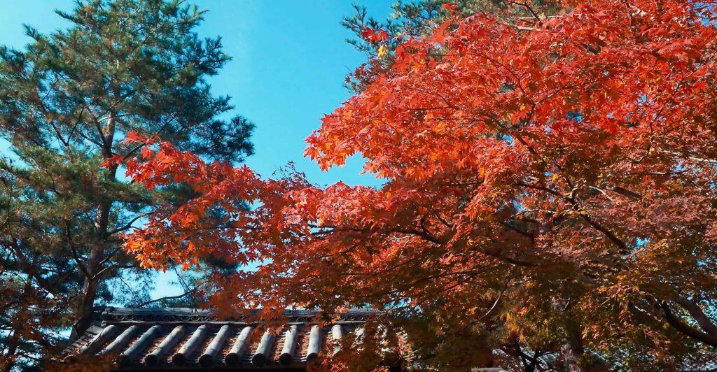 高台寺境内の紅葉