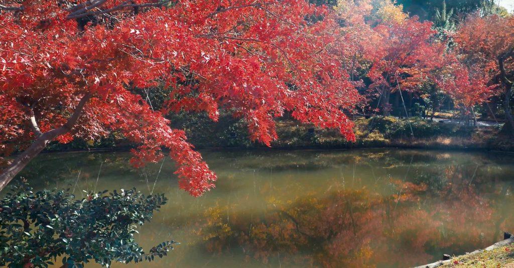 臥龍池と紅葉