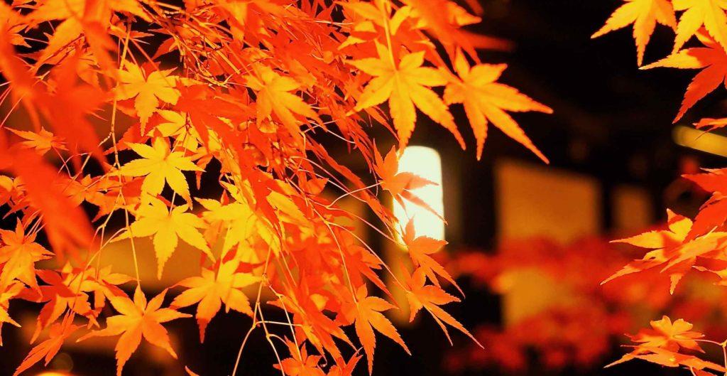 勝林寺紅葉のライトアップ