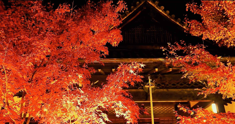 勝林寺の紅葉ライトアップ