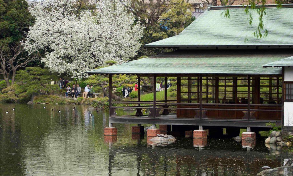 清澄庭園の桜