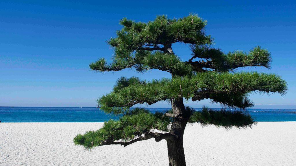 白砂青松の白良浜海岸