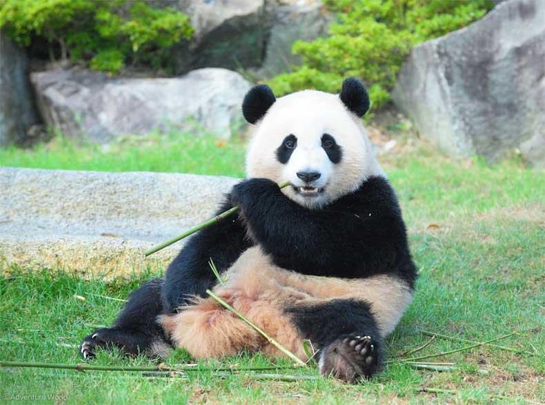 まずはパンダの生態や普段の生活を学ぶ