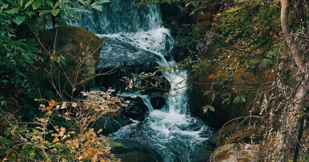 来宮神社大楠近辺の滝