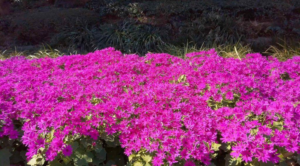 真冬に咲く花
