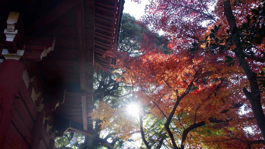 本土寺の仁王門と紅葉