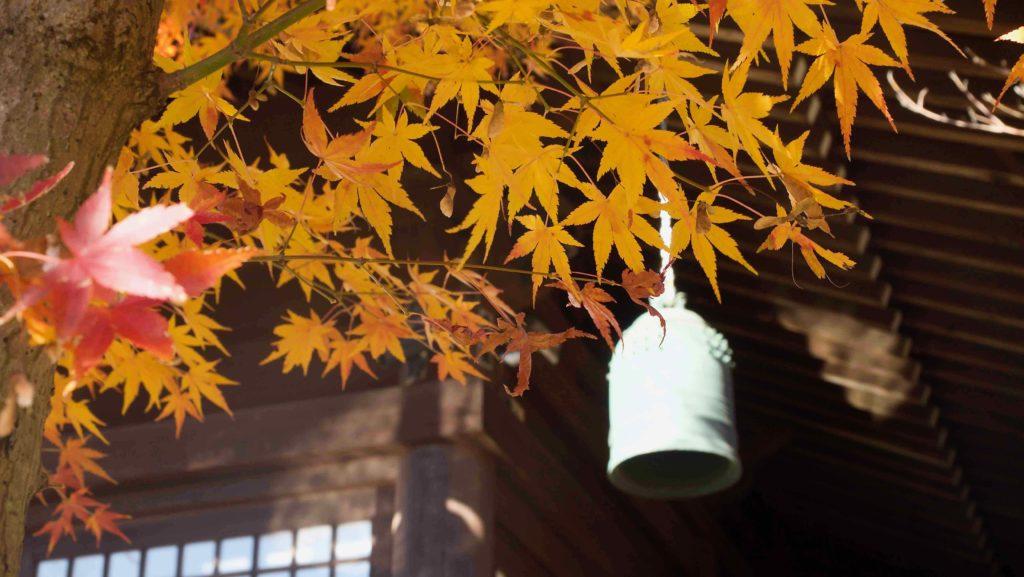 本土寺の本堂と紅葉