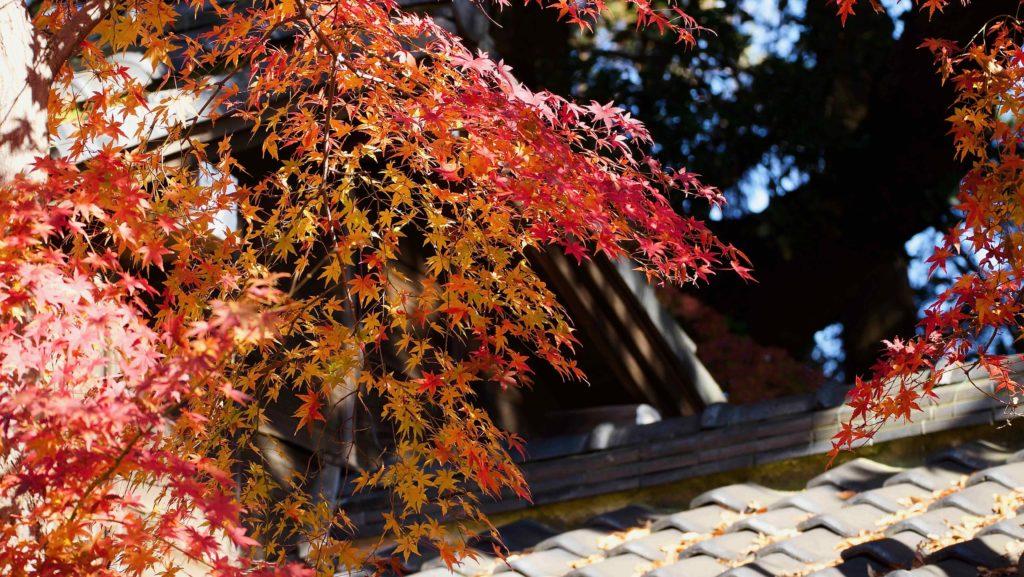 本堂横の回廊は紅葉密集地帯