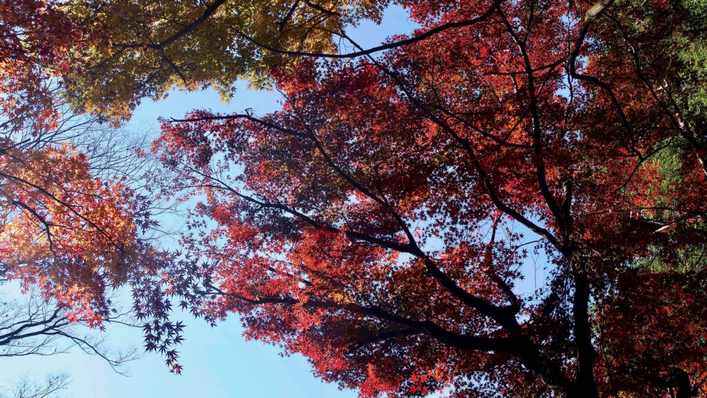 回廊の裏側の紅葉