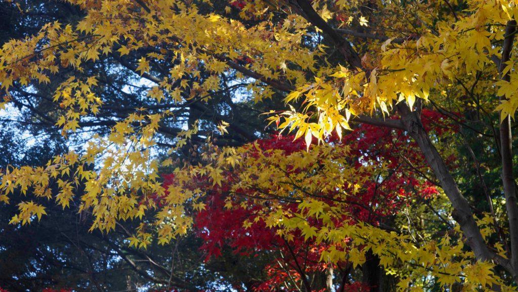 本土寺の紅葉と光