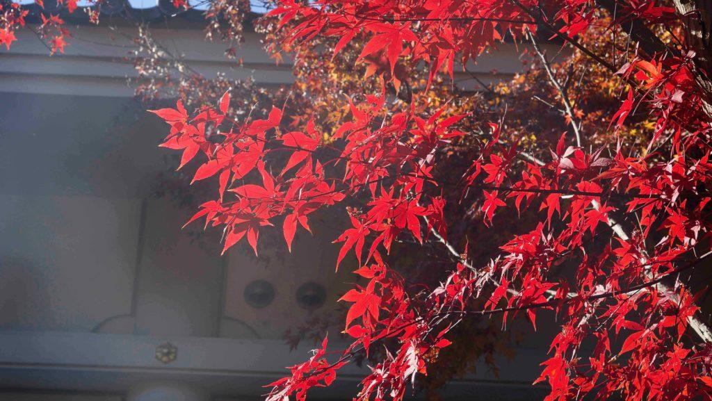 本土寺の紅葉と蔵