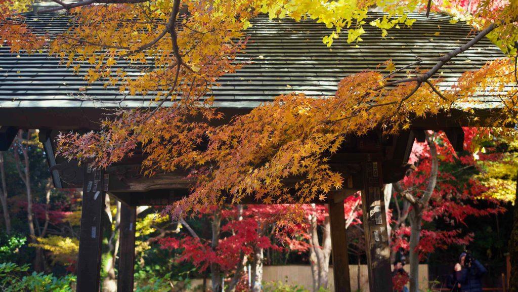 乳出霊水の紅葉