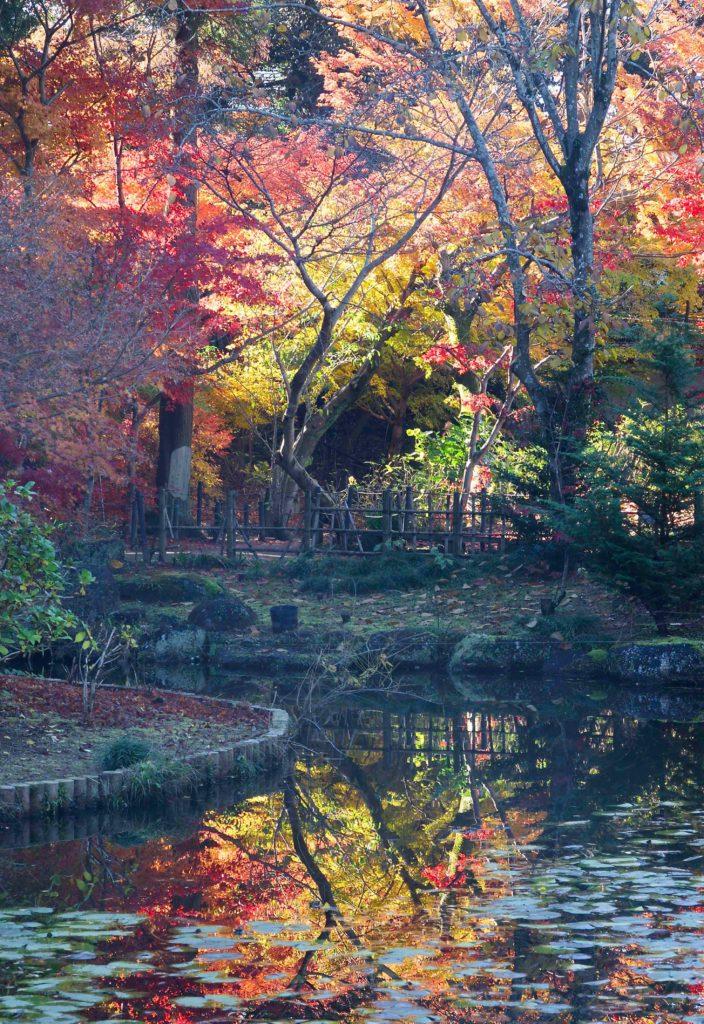 本土寺の池の周りを散策