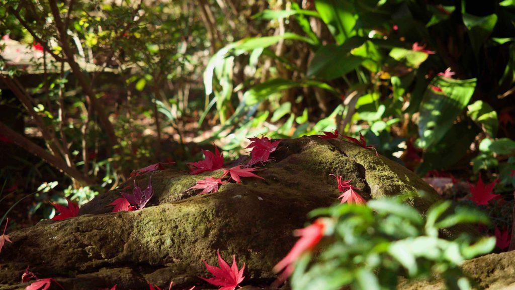 苔むした岩の上の散り紅葉