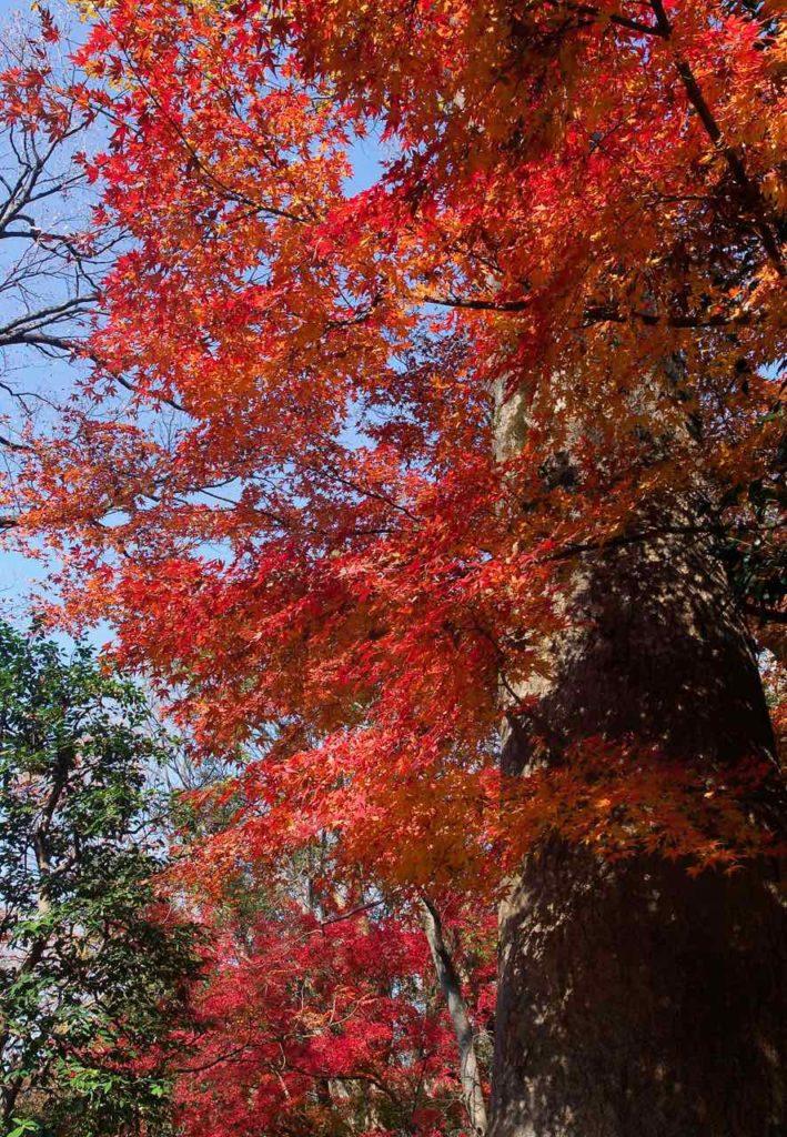 六義園 紅葉と青空