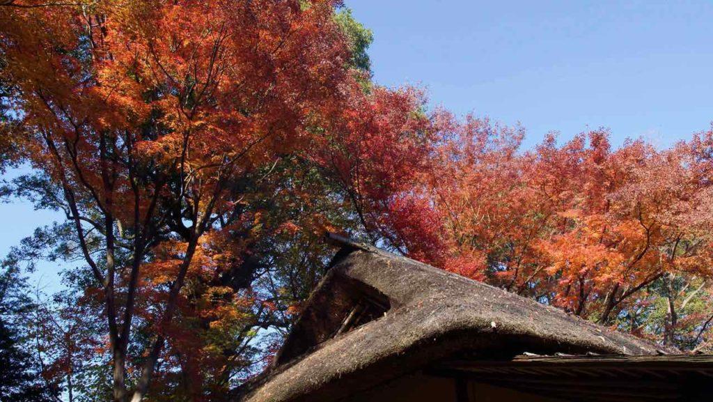 六義園の紅葉と東屋