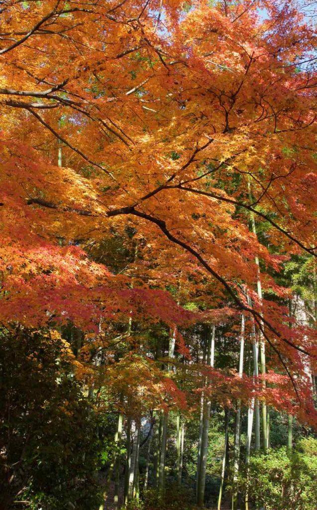 六義園の竹林と紅葉