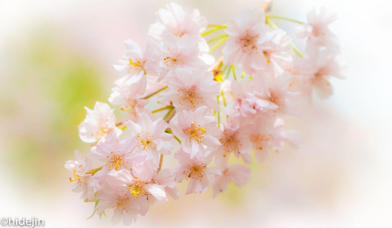 日比谷公園の花たち