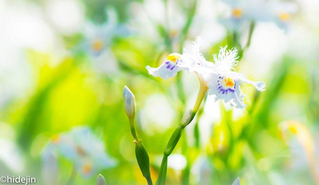 日比谷公園の花