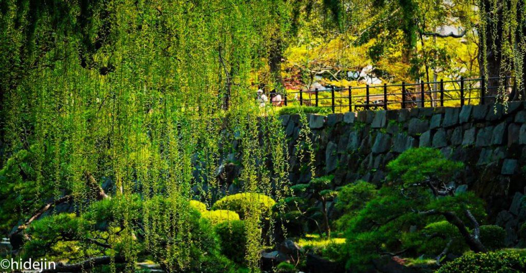 日比谷公園の柳