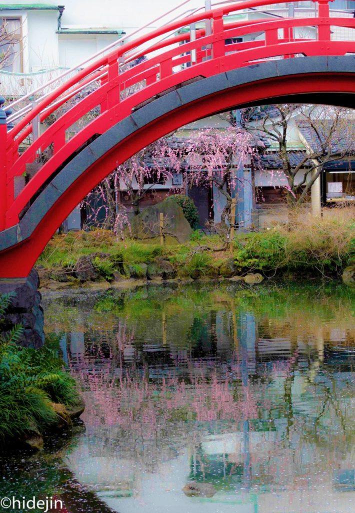 太鼓橋と梅