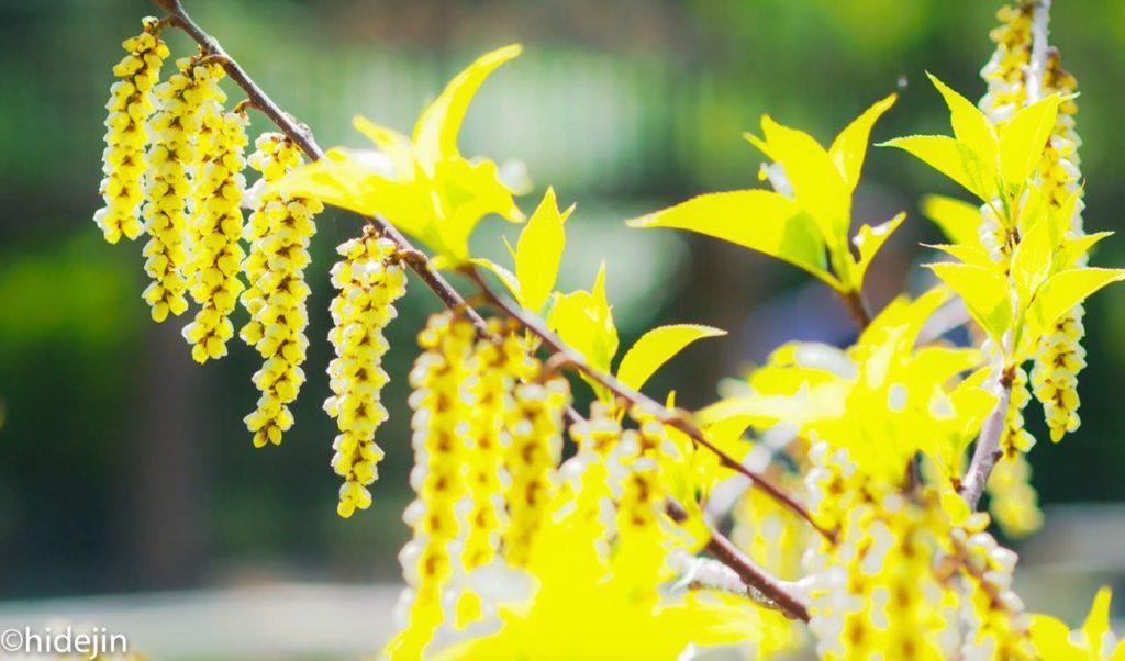 本土寺の花