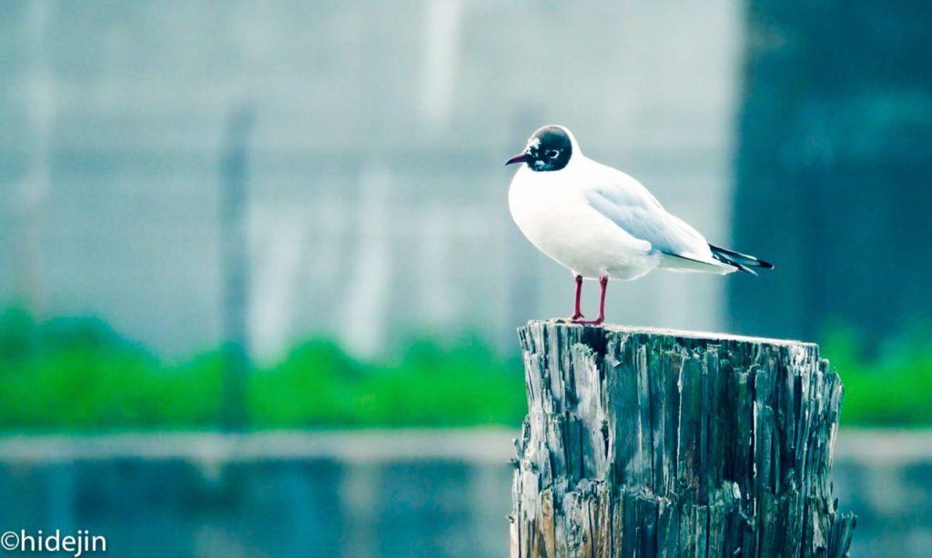 水鳥を観察