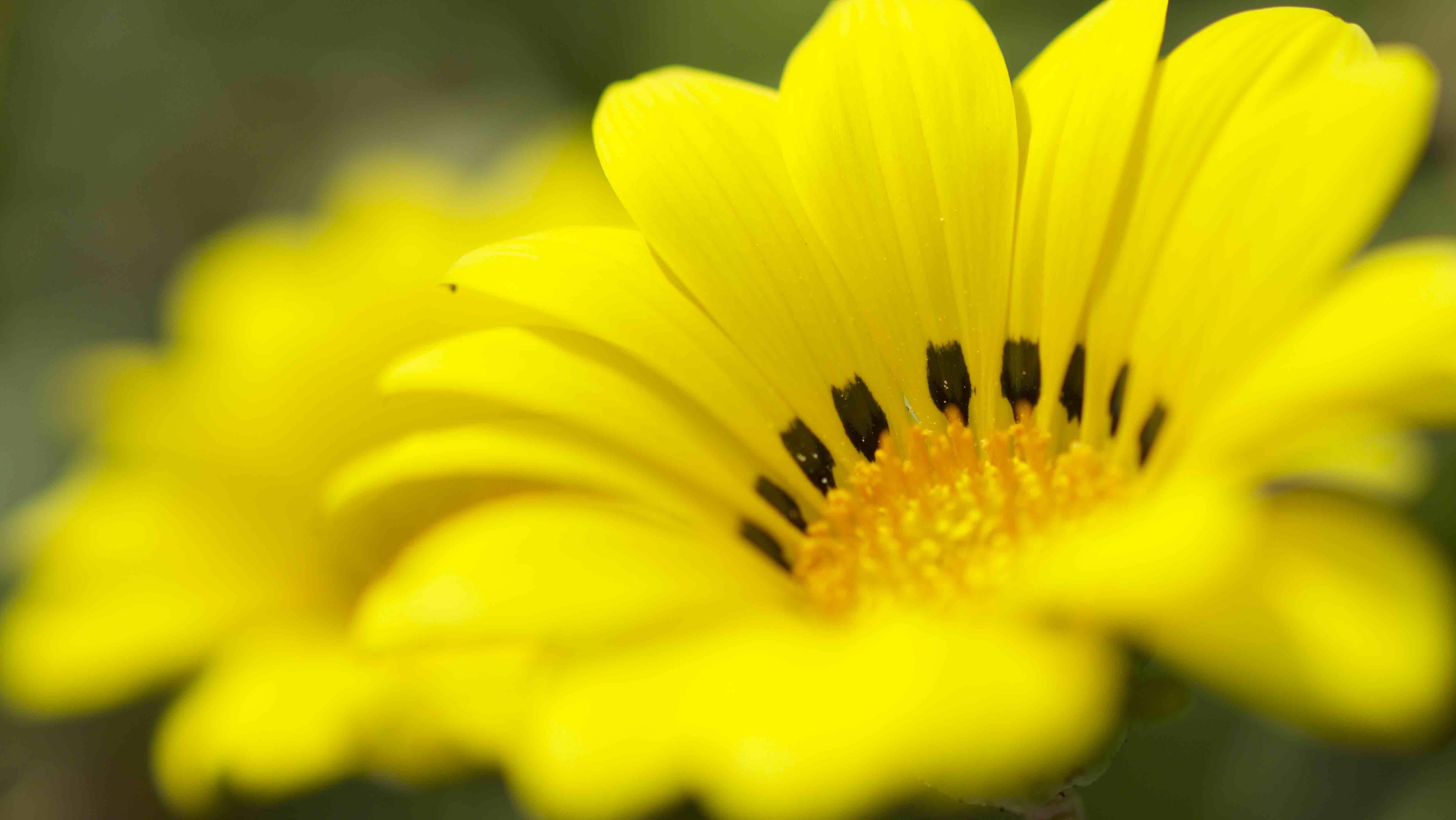 春の花を探して散策