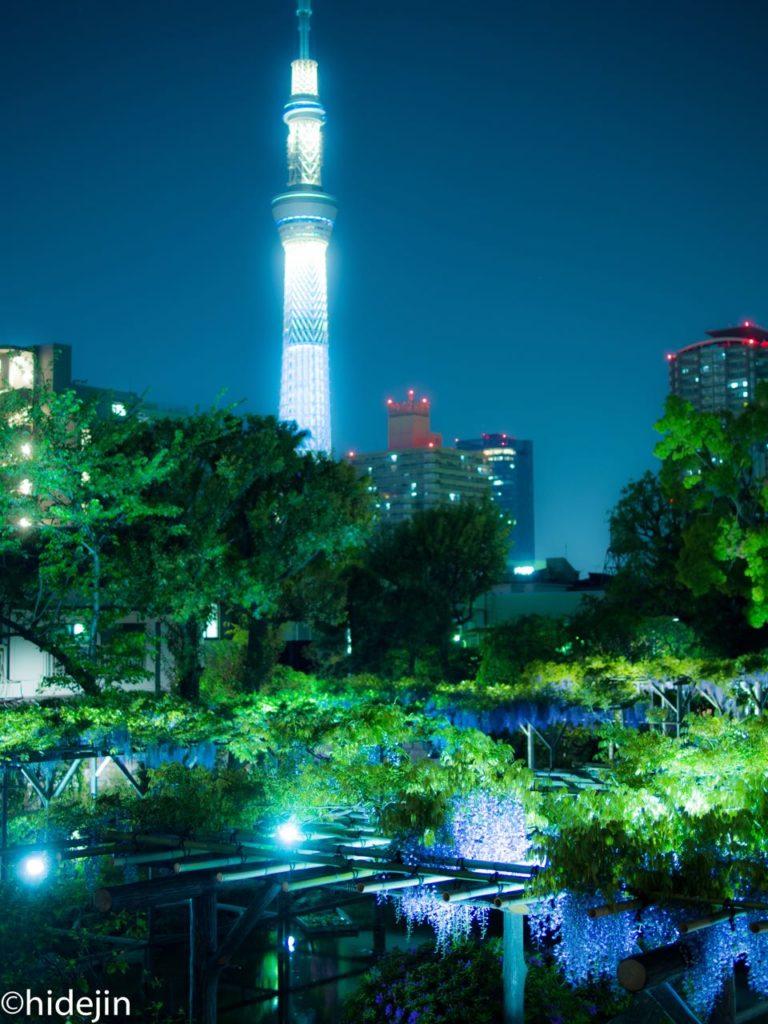 亀戸天神境内と東京スカイツリー