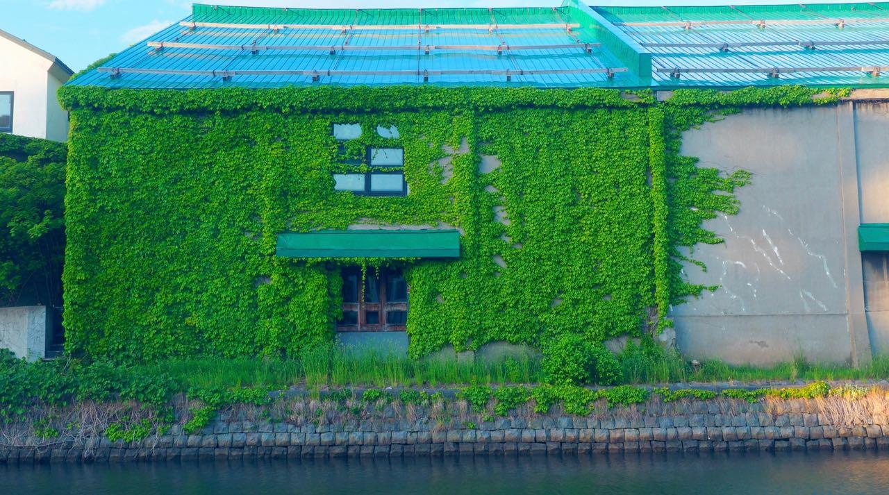 小樽運河の2つの顔 蔦の壁とライトアップ